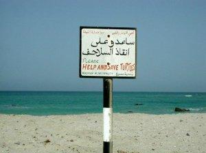 TURTLE -MASIRAH image2